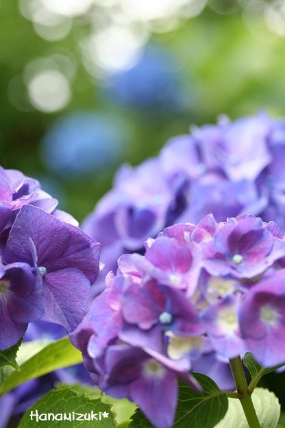 blue&purple color