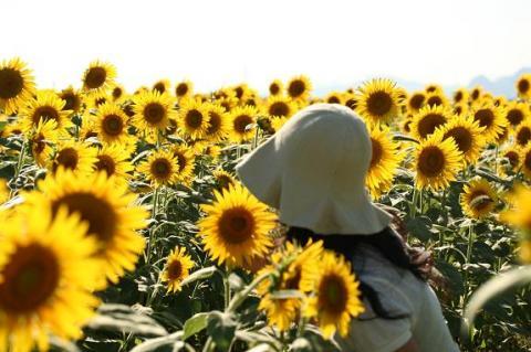 向日葵に囲まれて~♪
