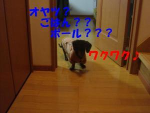 DSC01528_convert_20080301090147.jpg