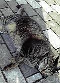 cat091005