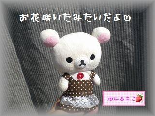 ちこちゃんの観察日記2011★20★オクラの花-1