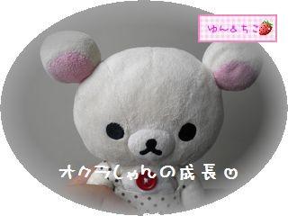 ちこちゃんの観察日記2011★21★オクラさんの成長-1