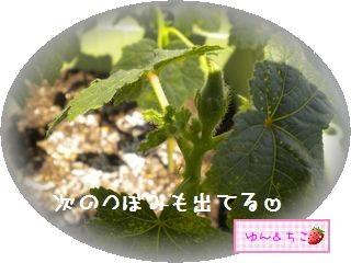 ちこちゃんの観察日記2011★23★意を決して・・・収穫-4