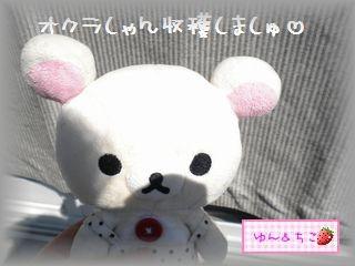 ちこちゃんの観察日記2011★23★意を決して・・・収穫-1