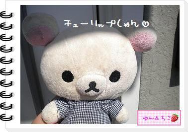 ちこちゃんの観察日記2012★9★チューリップの観察5-1