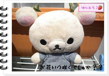 ちこちゃんの観察日記2012★9★チューリップの観察5-6