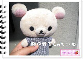 ちこちゃんの観察日記★2012★謎の野菜4-1