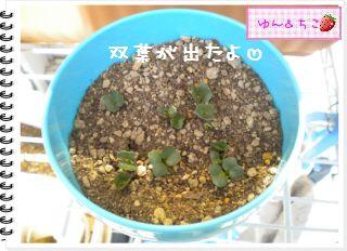 ちこちゃんの観察日記★2012★謎の野菜4-3