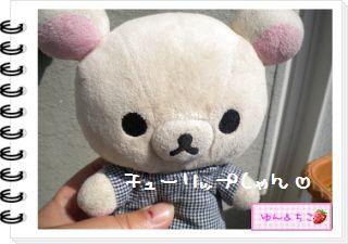 ちこちゃんの観察日記2012★11★チューリップの観察6-1