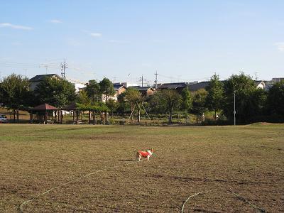 草刈してる人を見る10.31