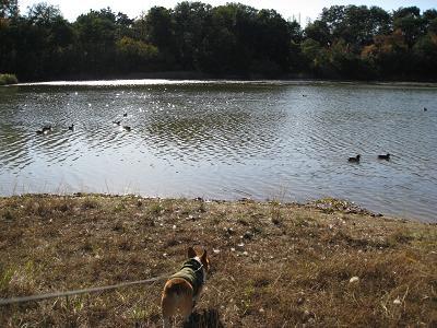 池に向かうと11.19