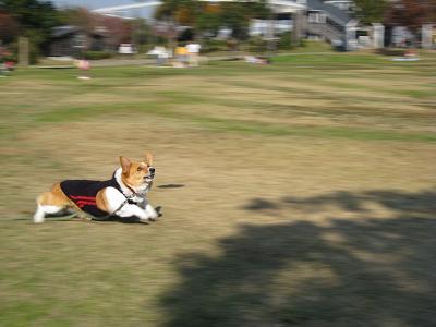 戸田川で走る②11.25