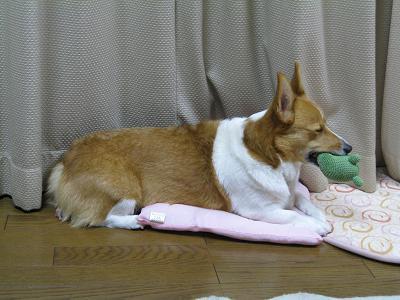 眠いけどくわえる②12.7