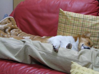 足の間で寝る②2.26