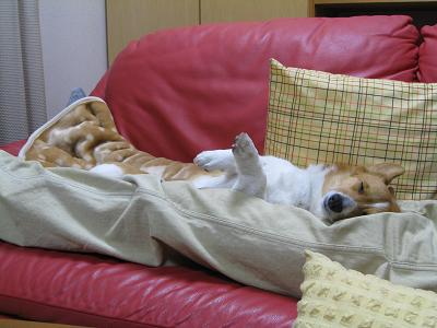 足の間で寝る③2.26