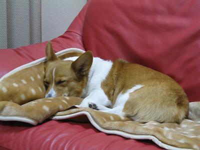 番犬は疲れる2.25