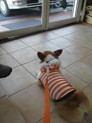 見張る犬9.27