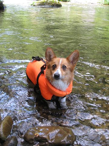 泳ぐわよ7.10