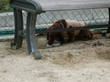 ベンチの下
