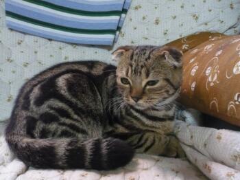 P1020396猫1