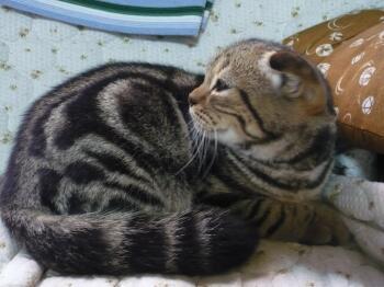 P1020395猫2