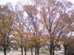 自宅前の木々