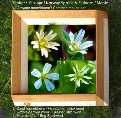 110517 May Flowers  Stellaria en Cerastium Base copy