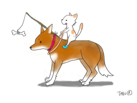 犬と猫の関係