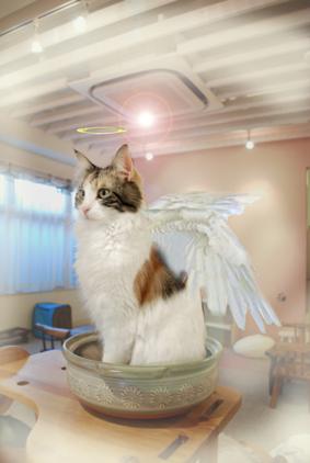 天使アイル