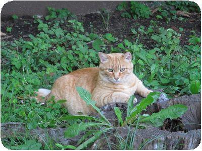猫@日比谷公園