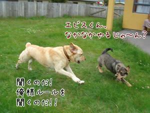 Yebisu&Sandy4