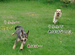 Yebisu&Sandy6