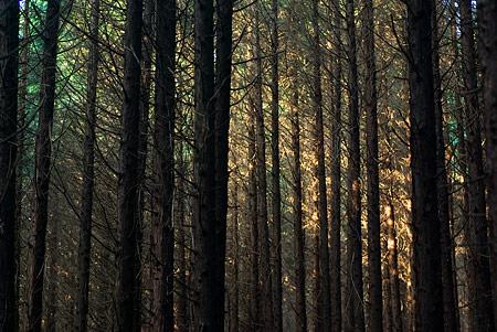 海上の森1-11