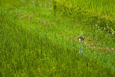 葦毛湿原-2