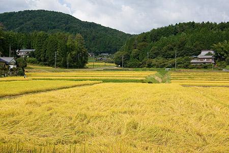 農村景観-10