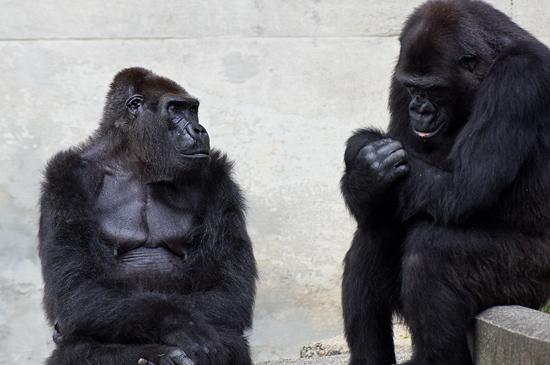東山動物園-11