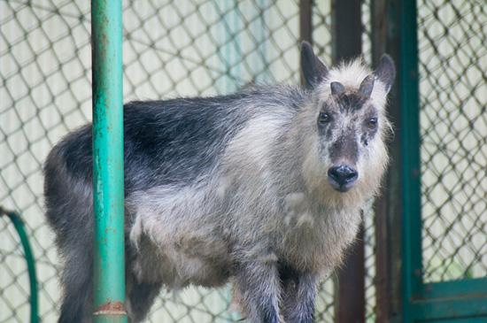 東山動物園-9