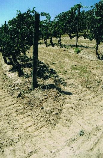 2007 lorenzo hatake-7