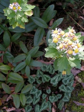 my-garden 026 (3)