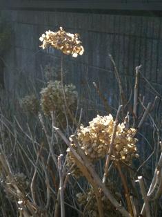 my-garden 070