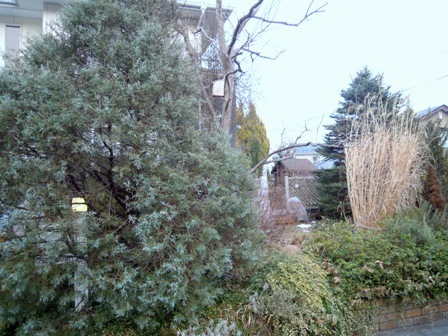 my-garden 038 (3)