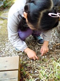 my-garden 122