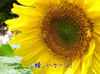 s-P1200305.jpg