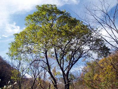 kinoko2011111203
