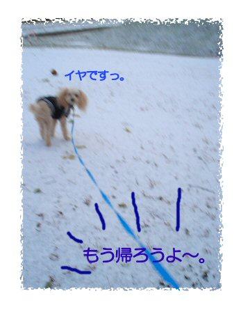 初雪の散歩