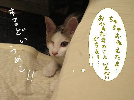 梅子さん、トイレは砂場じゃありませんよ(´д`)
