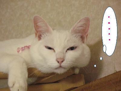 私って猫に見下されてる事が多いのねヽ(T-T)ノ