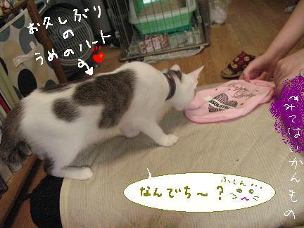 梅子部長(*`艸´)ウシシシ?逃げるなら今やでぇ??